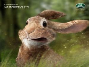 landrover_rabbit_aotw