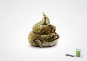 2_frog_aotw