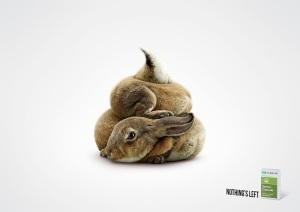 3_rabbit_aotw