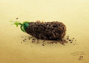 bio_suisse_earthy_veggies_eggplant_aotw_aotw