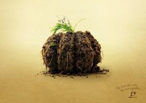 bio_suisse_earthy_veggies_pumpkin_aotw_aotw