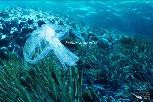 jean-michel-cousteaus-ocean-futures-brasil-help-them-go-extinct-print-375689-adeevee