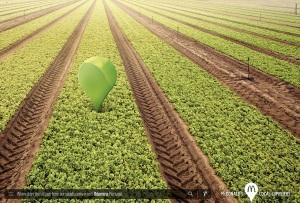 mcdonalds-tomato-onion-milk-lettuce-print-376335-adeevee