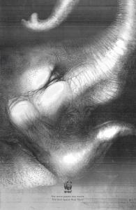 wwf-tiger-elephant-orangutan-print-378809-adeevee