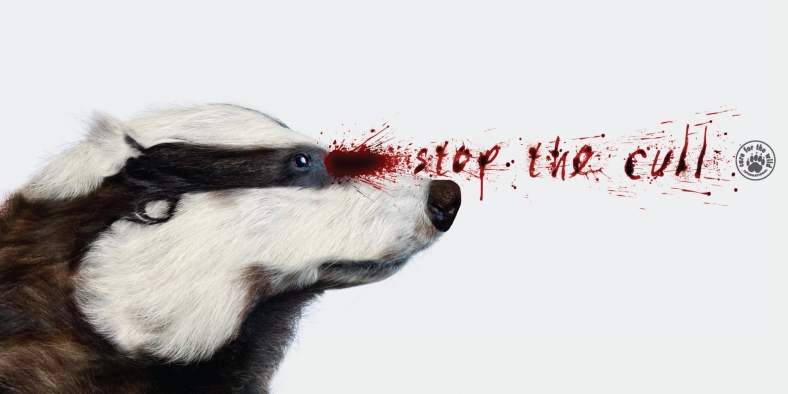 care-for-the-wild-care-for-the-wild-stop-the-cull-print-380018-adeevee.jpg