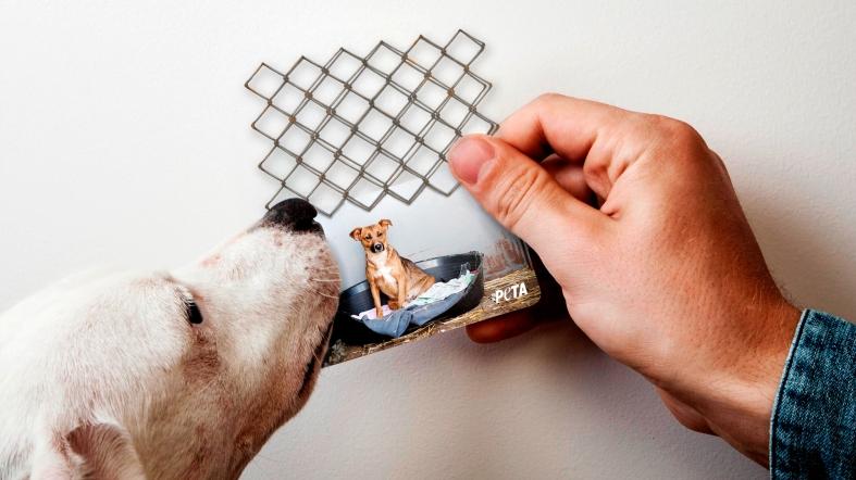 peta-peta-business-cards-direct-marketing-design-380211-adeevee