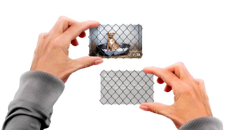 peta-peta-business-cards-direct-marketing-design-380212-adeevee