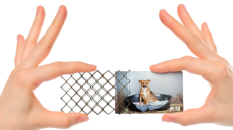 peta-peta-business-cards-direct-marketing-design-380213-adeevee